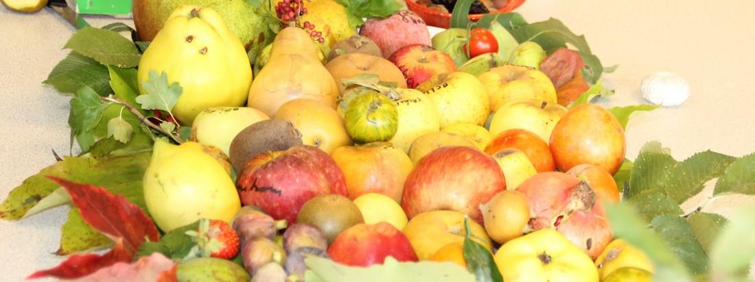 La diversité de nos fruits